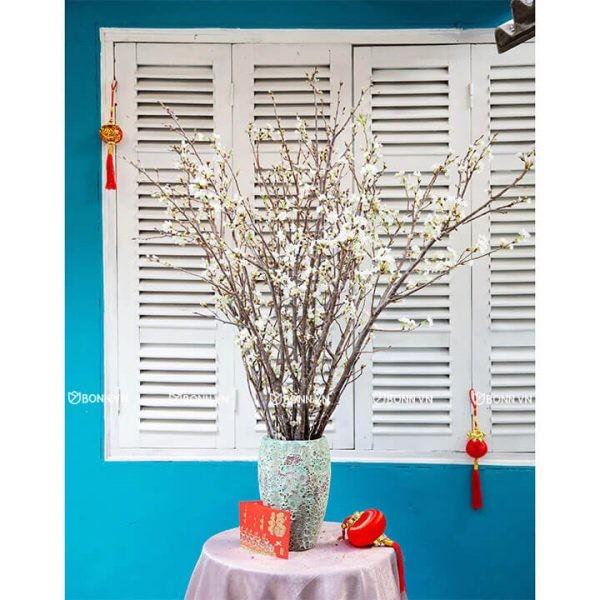 binh hoa dao sakura nhat ban