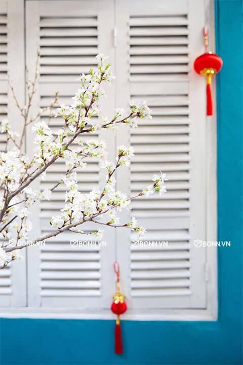 hoa anh dao sakura nhat ban